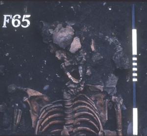 Image of the skeleton