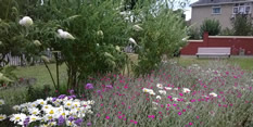 Greening Grey Britain for health and happiness