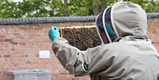 Honey show's a sweet new treat at 'Grow Your Own'