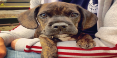 Rescue dogs get Very Important Pooches treatment with fake designer blankets