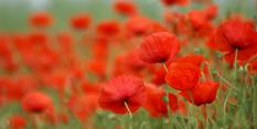 Memorial to honour Nottinghamshire's Great War dead
