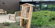 'Bee Hotels' popping up around Nottingham ahead of World Bee Day